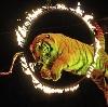 Цирки в Камызяке